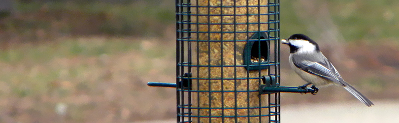 Chesterton Feed & Garden - Bird Feeding