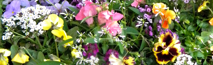 Chesterton Feed & Garden - Mixed Flowers
