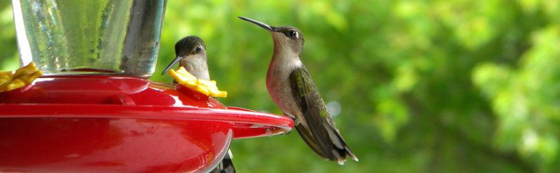 Chesterton Feed & Garden - Hummingbird
