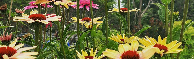 Chesterton Feed & Garden - Flowers
